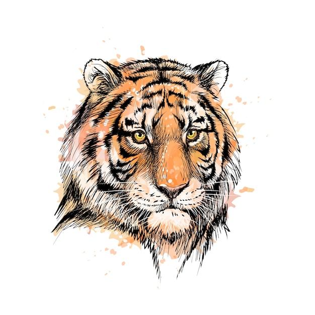 Портрет головы тигра из всплеск акварели, рисованный эскиз. иллюстрация красок Premium векторы