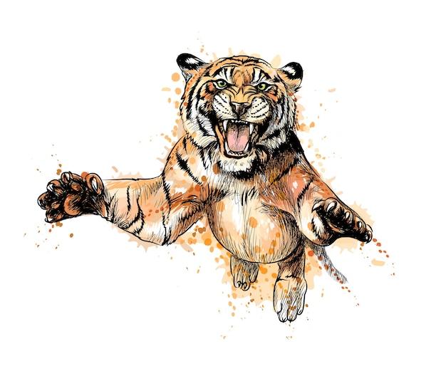 Портрет тигра, прыгающего с брызг акварели, рисованный эскиз. иллюстрация красок Premium векторы