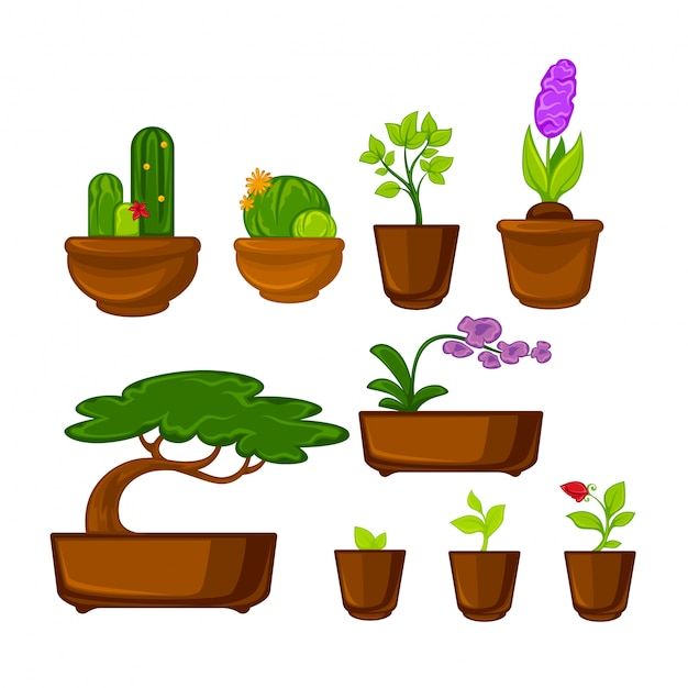 Pots plants with flowers and leaves set. vector illustration. Premium Vector