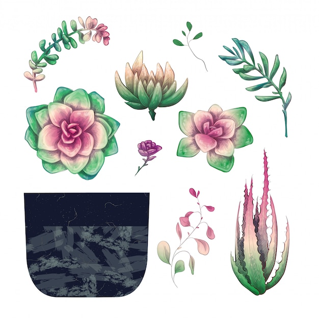 Potted cacti and succulents plants badge collection set. Premium Vector
