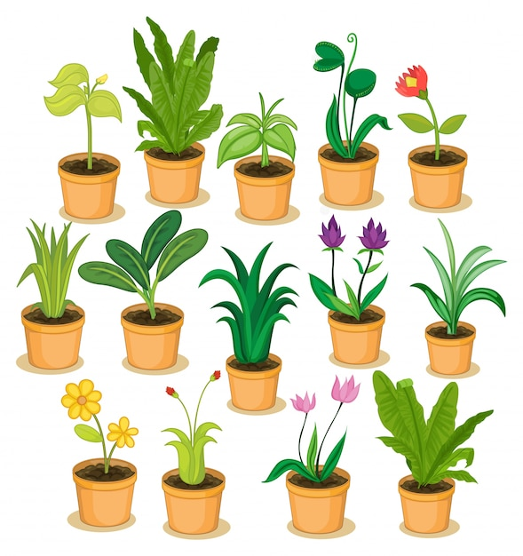 Potted plants and flowers illustration Free Vector