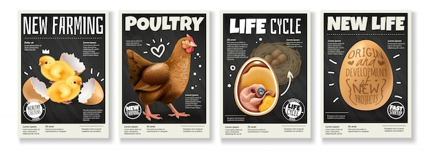 Poultry farming chicken life cycle raising birds from eggs embryo development 4 realistic posters set Free Vector