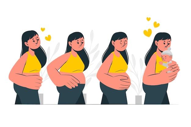 妊娠段階の概念図 無料ベクター