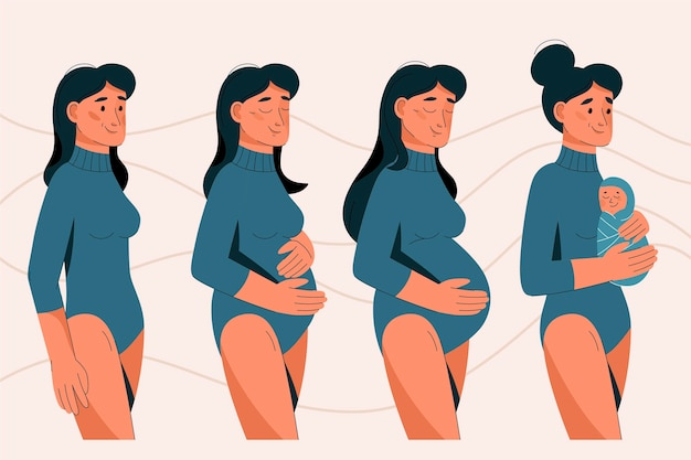 Pregnancy stages illustrated Free Vector