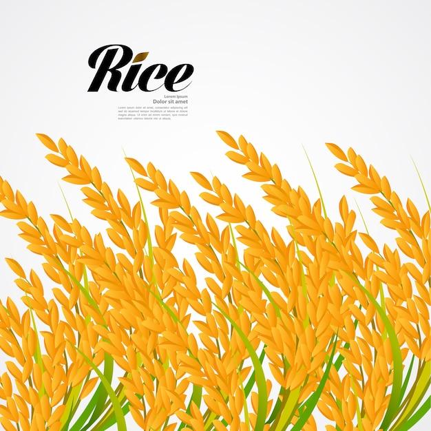 Премиум рис отличное качество дизайн-концепция Premium векторы