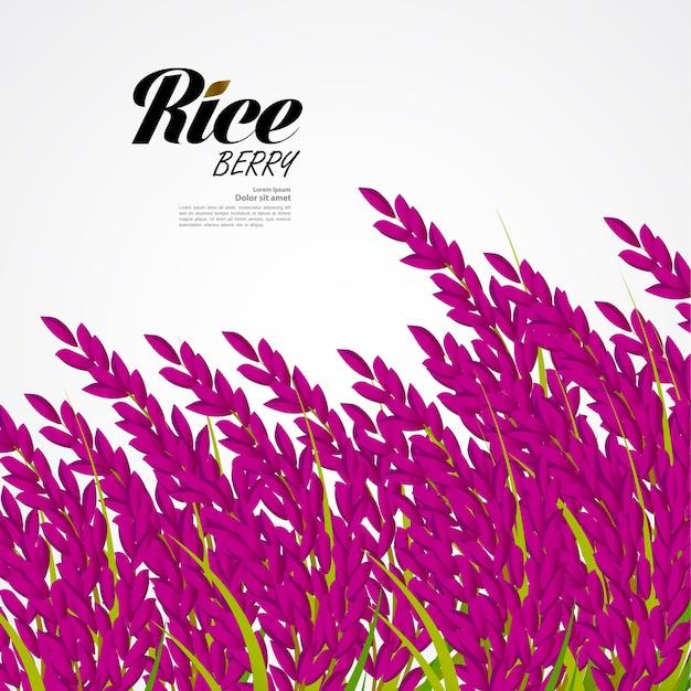 Premium rice great quality design concept Premium Vector