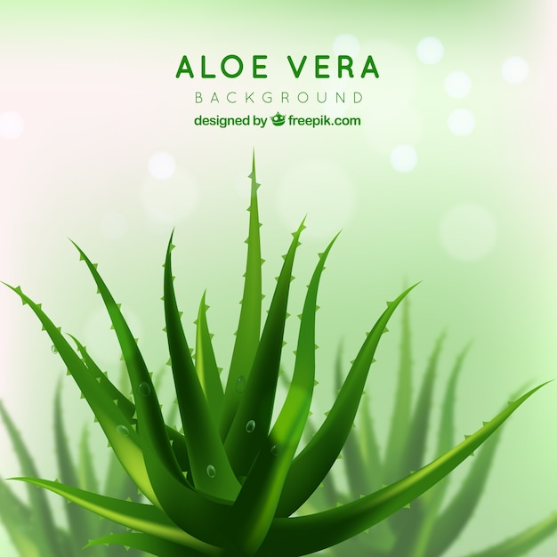 pretty green background of aloe vera vector free download. Black Bedroom Furniture Sets. Home Design Ideas