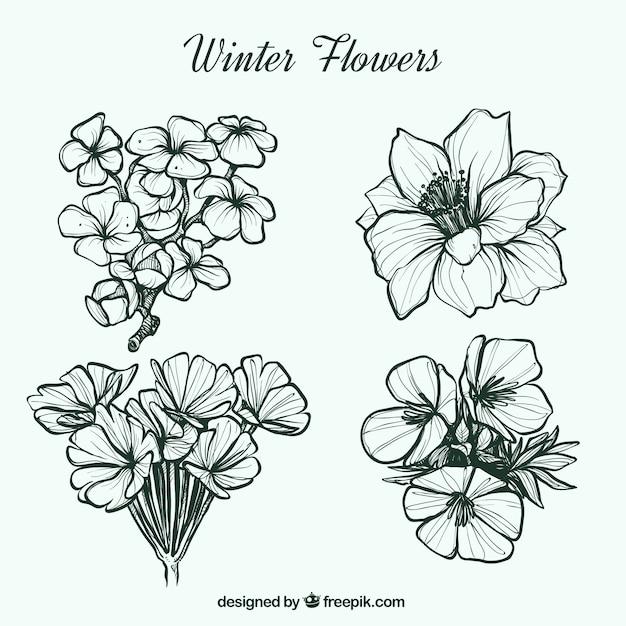 Pretty hand-drawn winter flowers