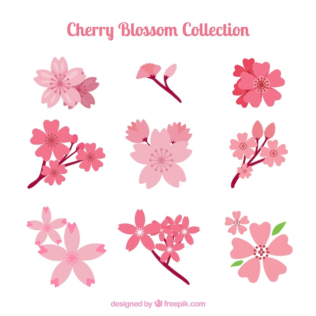 Pretty spring cherry blossoms Free Vector