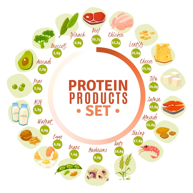 Protein containing products flat circle diagram Free Vector