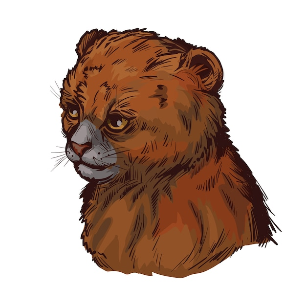 Пума ребенка, портрет экзотических животных изолированных эскиз. рисованной иллюстрации. Premium векторы