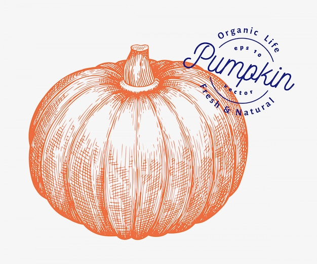Pumpkin illustration. hand drawn vector vegetable illustration. engraved style halloween or thanksgiving day Premium Vector