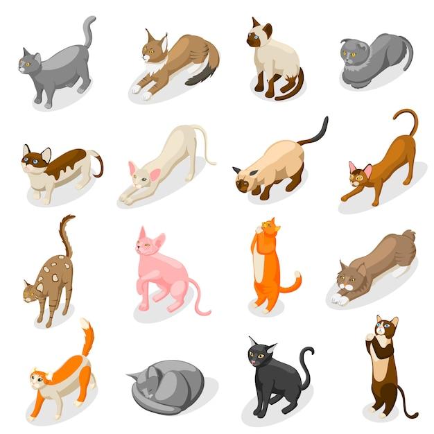 Чистокровные кошки изометрические иконы Бесплатные векторы