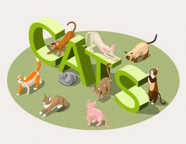 Purebred cats isometric Free Vector