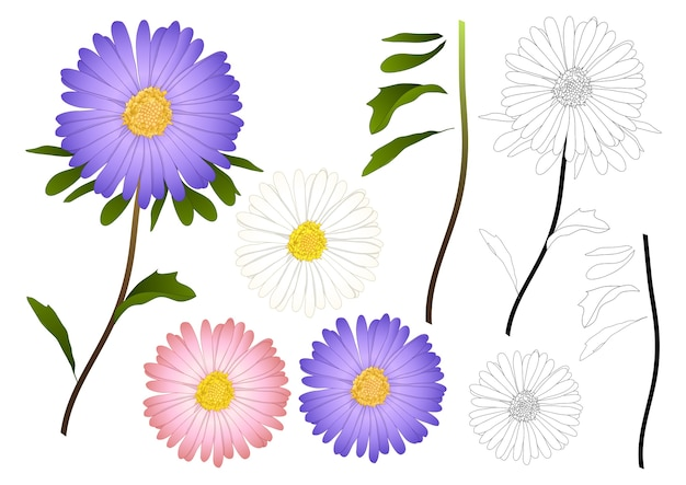 Purple pink and white aster outline Premium Vector
