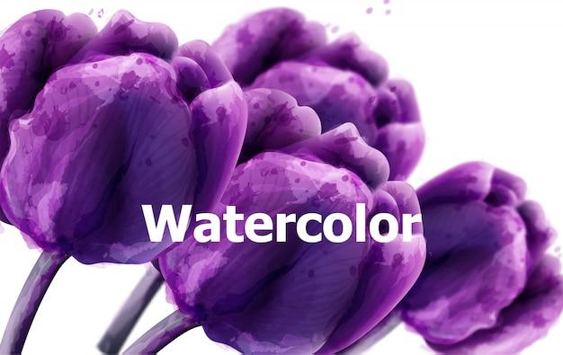 Purple tulip flowers watercolor background Premium Vector