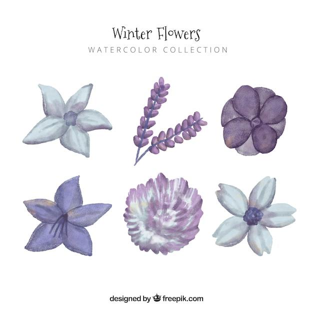 Purple winter flowers in watercolour