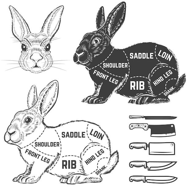 Кролик мясник диаграмма. элемент для плаката, меню. иллюстрация Premium векторы