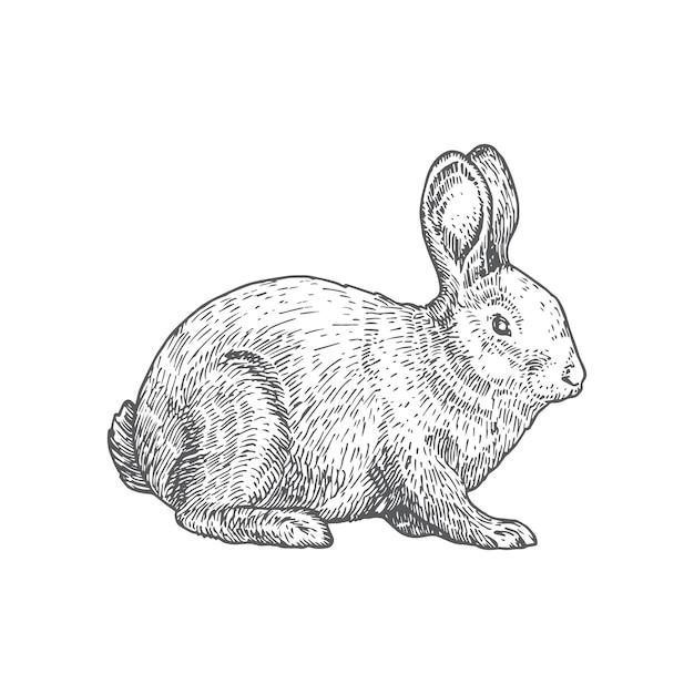Illustrazione disegnata a mano del coniglio. Vettore gratuito
