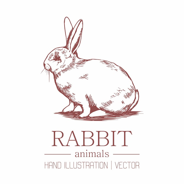 Rabbit. vintage style. hand drawing. Premium Vector