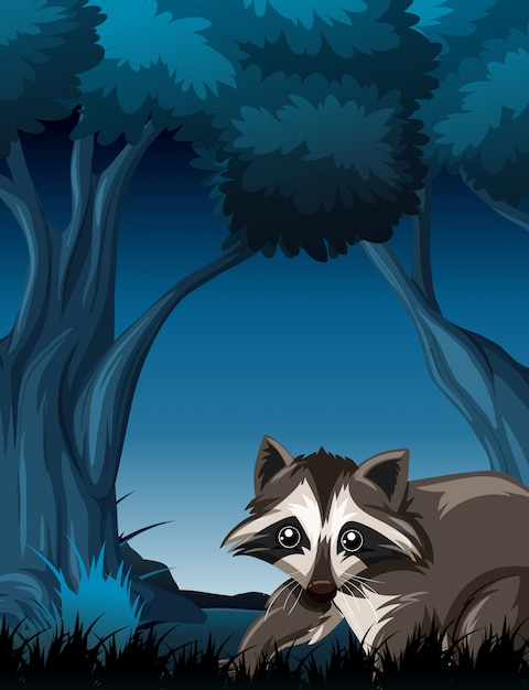 Raccoon in wild forest Free Vector