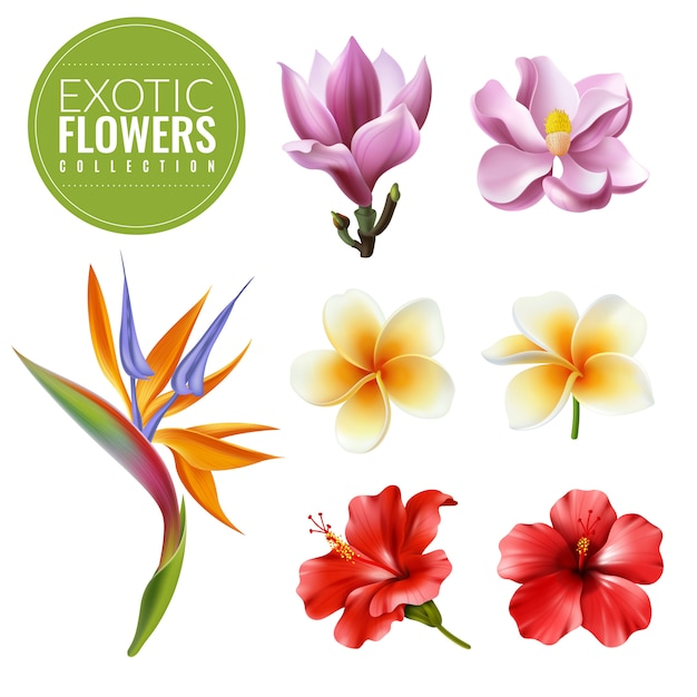 風変わりなエキゾチックな花セット。白い背景の要素ハイビスカスマグノリアストレチアプルメリアの熱帯の花のコレクション Premiumベクター