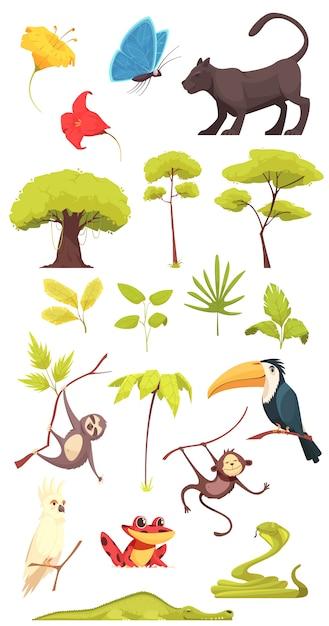 Insieme della giungla della foresta pluviale Vettore gratuito