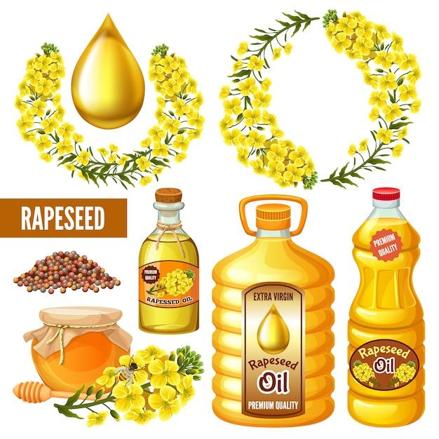菜種、花、キャノーラ油。セイヨウアブラナ Premiumベクター
