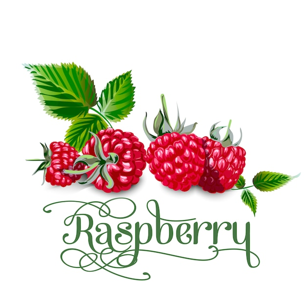 Raspberry leaves and berries isolated on white background Premium Vector
