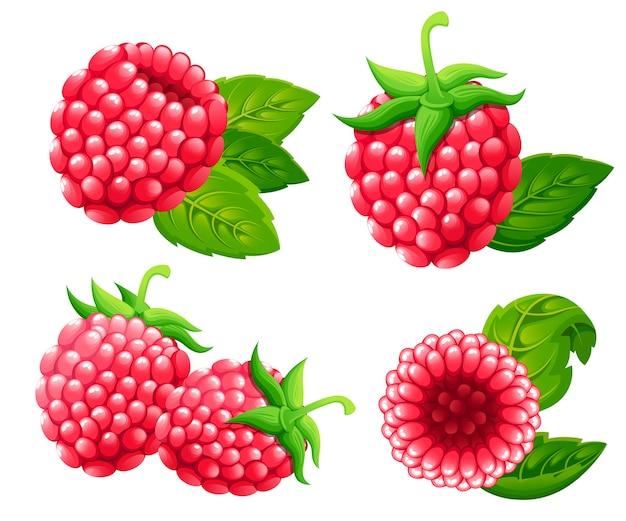 ラズベリーセット。緑の葉とラズベリーのイラスト。装飾的なポスター、エンブレム天然物、ファーマーズマーケットのイラスト Premiumベクター