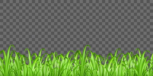 grass transparent background. Real Green Grass On Transparent Background Vector Premium Vector