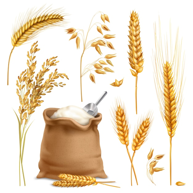 Realistic agricultural crops set Free Vector