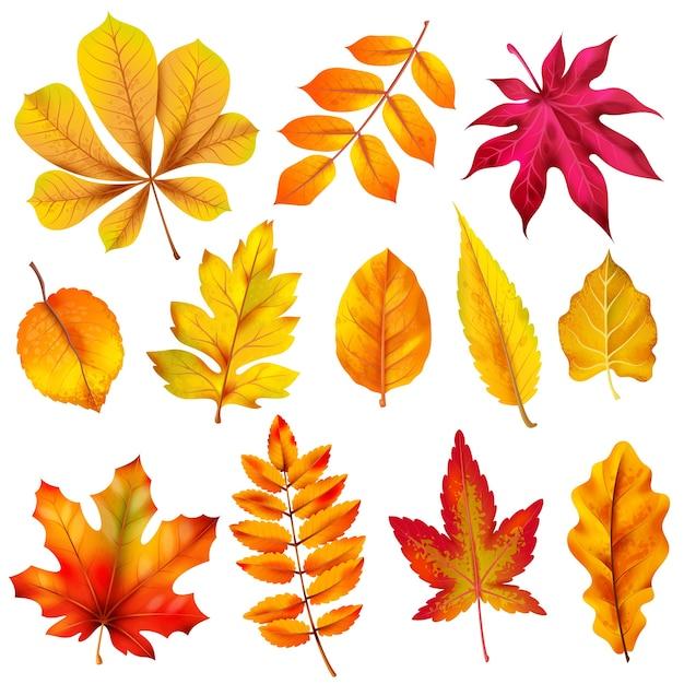Реалистичные осенние листья. падение оранжевой древесной листвы каштана и клена. Premium векторы