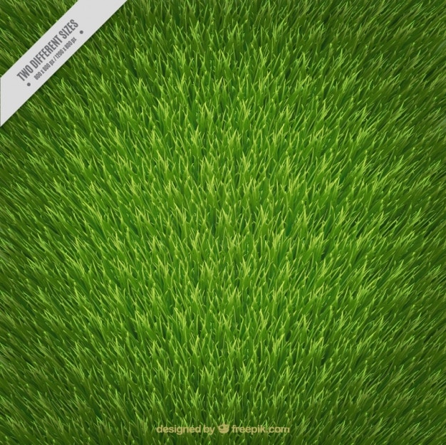Realistic background of green grass