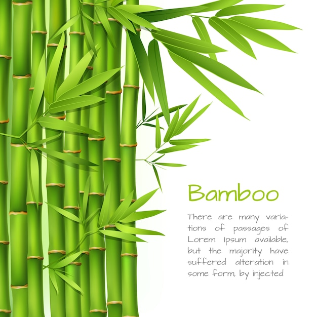 Realistic bamboo background Vector | Premium Download