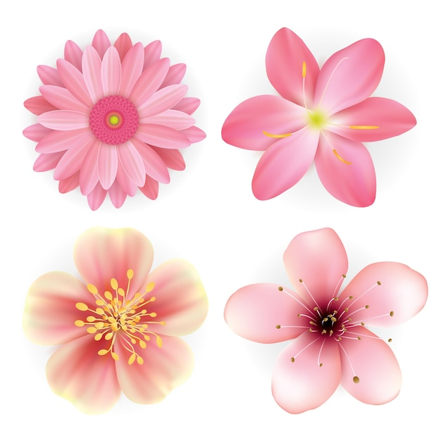 Realistic beautiful pink flowers illustration set vector premium realistic beautiful pink flowers illustration set premium vector mightylinksfo