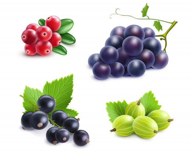 Realistic berries set Free Vector