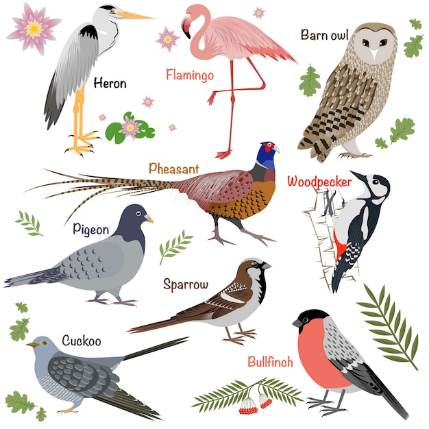 Realistic birds collection. barn owl and heron, bullfinch and pheasant, woodpecker and flamingo. Premium Vector