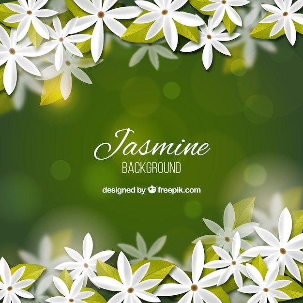 Jasmine Vectors, Photos And PSD Files