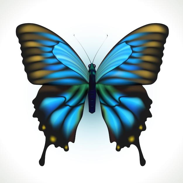 分離されたリアルな明るい蝶 無料ベクター