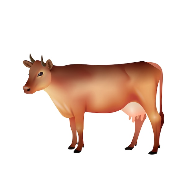 Realistic brown cow Free Vector