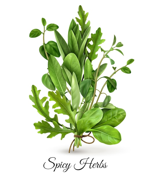 Realistic bunch of fresh green leafy vegetables spicy herbs with arugula spinach thyme white Free Vector