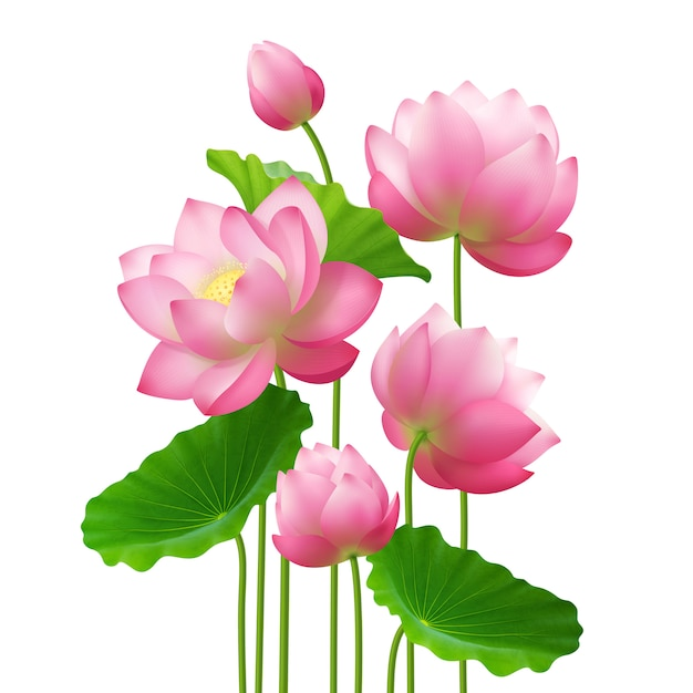 Realistic bunch lotus flowers Free Vector