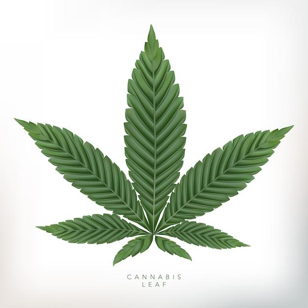 灰色の背景で現実的な大麻葉のイラスト。 Premiumベクター