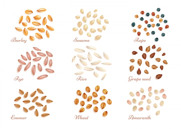 Realistic cereal grains and oil seeds vector set Premium Vector