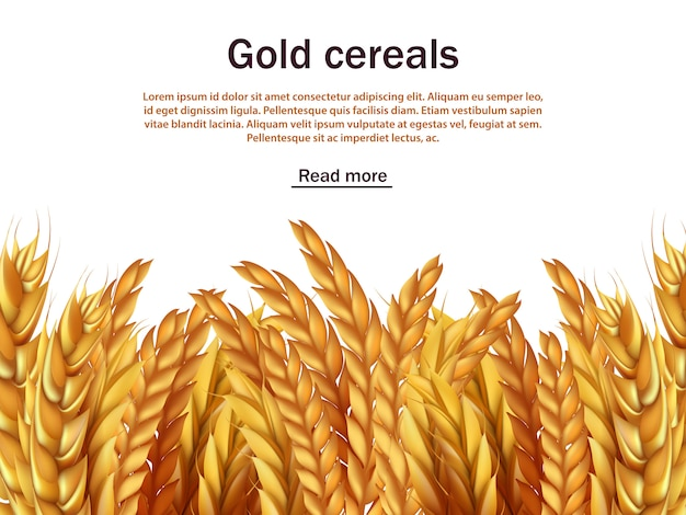 Realistic cereals background with text template. ears of rye, wheat, barley Premium Vector