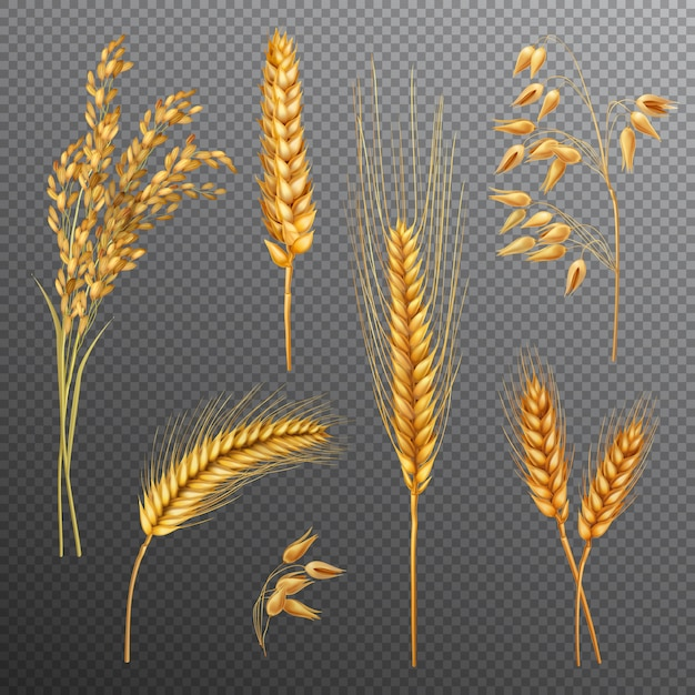 Realistic cereals transparent background set Free Vector