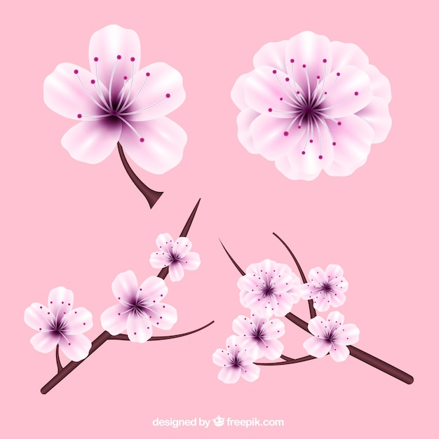 Realistic cherry blossoms with purple details Free Vector
