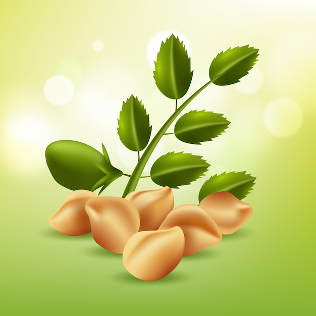 Realistic chickpea beans illustration Free Vector