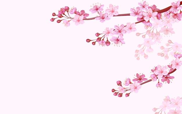 Realistic chinese pink sakura background on soft rose background. oriental pattern flower blossom spring background. 3d nature backdrop illustration Premium Vector